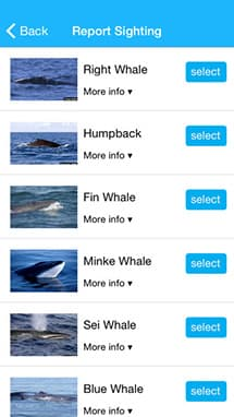 screen shot of whale alert app shoing list of types of whales