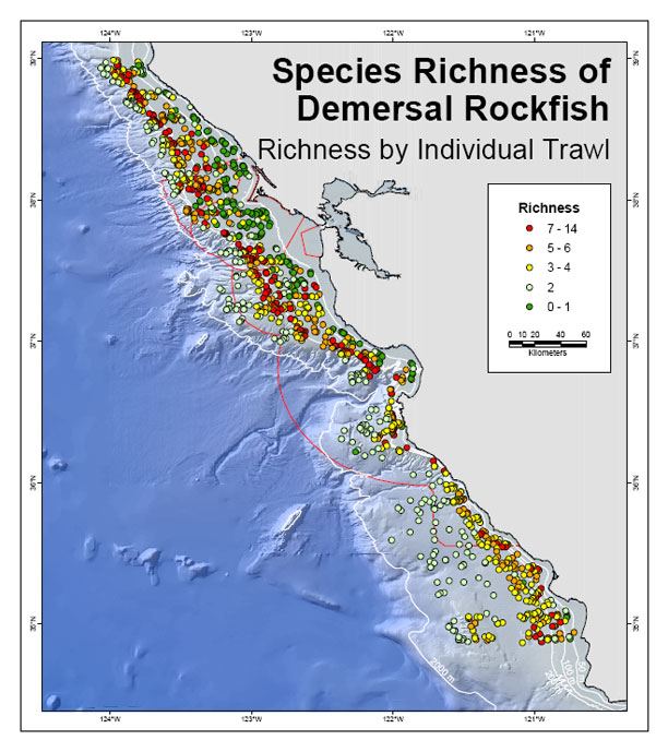 richness of rocfish population map