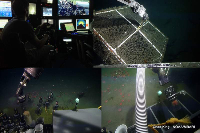 compilation of ROV Doc Ricketts
