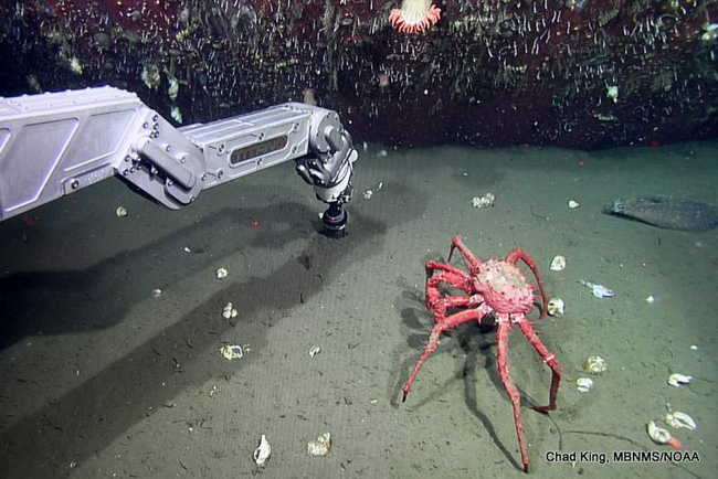 picture of robotic arm on ROV Doc Ricketts with flatfish and crab in background
