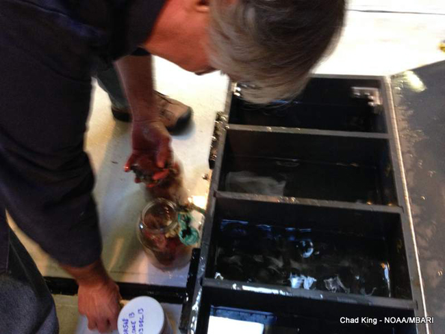 picture of Dr. Jim Barry preparing samples for future analyses