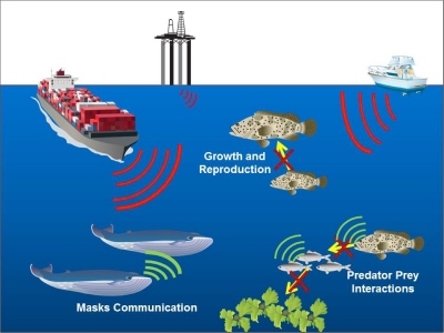 graphic of different sources of marine noise