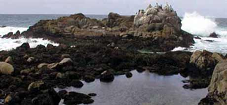 Point Pinos tidepool