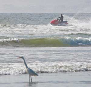 jet ski in surf, bird in foreground