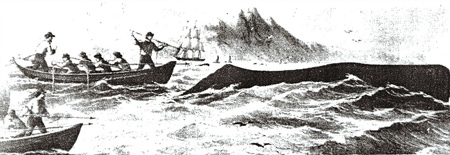 image of whaling in sam simeon cove