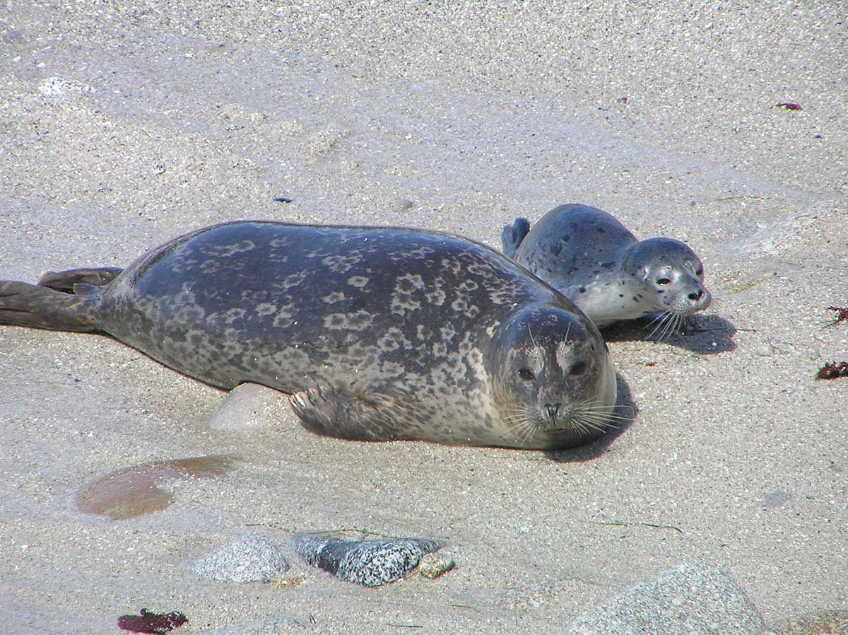 MBNMS: Seal, Sea Lion and Sea Otters