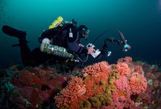 image if diver in sanctuary waters