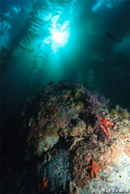 picture of rock w/ reef in MBNMS