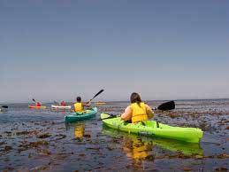 kayakers in kelp beds