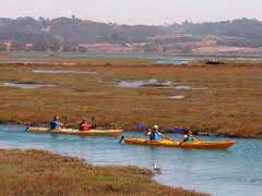 kayakers in elkhorn slough