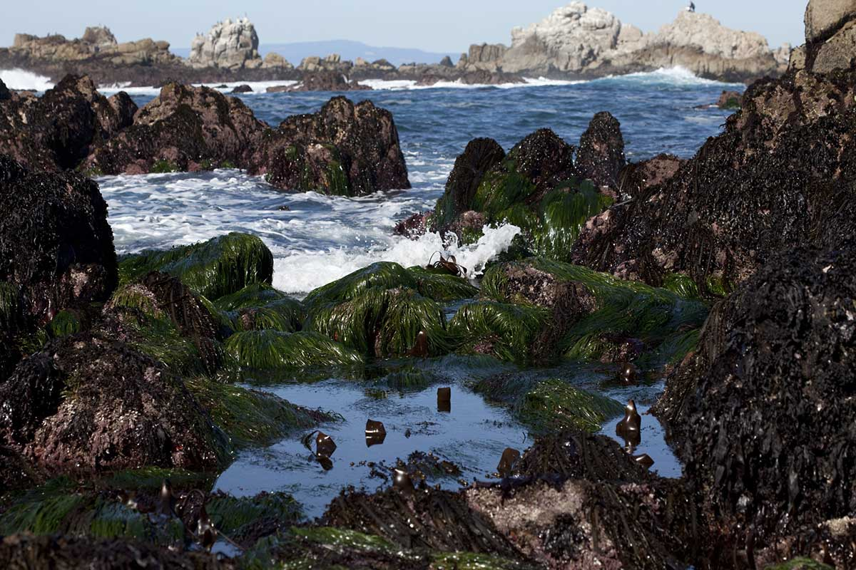 Mbnms terrific tide pools sea star in tidepool geenschuldenfo Choice Image