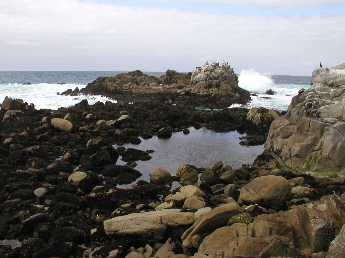Mbnms terrific tide pools monterey county geenschuldenfo Choice Image